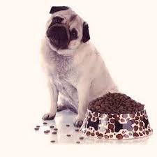 fat burning foods and ingredients for dogs and cats petcarerx