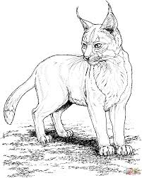 lynx coloring pages free coloring pages