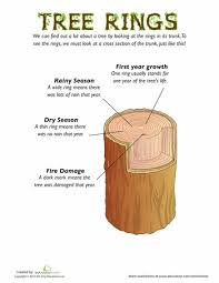 tree rings for kids tree rings worksheets and trees