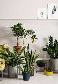 Home Decorating Plants The 25 Best Indoor Plant Decor Ideas On Pinterest Plant Decor