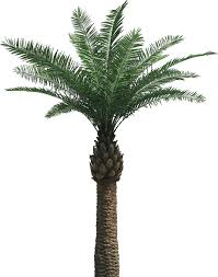 artificial palm tree and cocotree like real palm tree absolutely