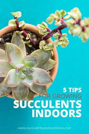 Beginners How To Grow Just by How To Grow Healthy Succulents Indoors Succulents And Sunshine