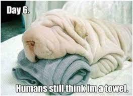 Towel Meme - humans still think i m a towel meme picture webfail fail