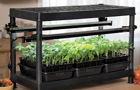 light requirements for growing tomatoes indoors indoor tomato garden seed starting system with adjustable grow