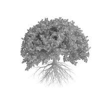 Oak Tree Drawing Oak Tree 3d Model Garden Cgtrader
