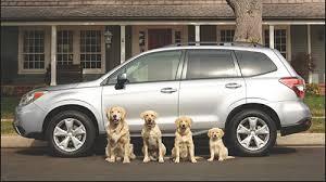 canine crash studies evaluate crate and carrier safety u2013 spot speaks