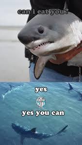 Shark Attack Meme - shark attack by shimon trabelsi 7 meme center