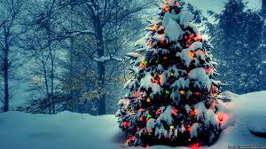 christmas tree with lights christmas tree with lights in nature wallpaper