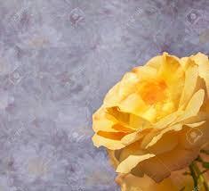 condolences card purple lilac floral sympathy condolences card with yellow