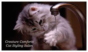 Creature Comforts Grooming Creature Comforts Cat Styling Salon Home Facebook