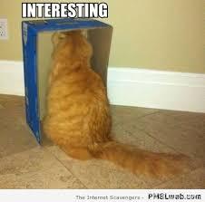 Interesting Memes - 39 interesting box funny cat meme pmslweb