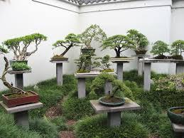 bonsai garden photo bonsai garden img 2409 jpg coutyard patio