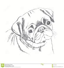 pug dog face hand drawn illustration sketch stock illustration