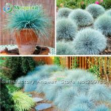 popular ornamental grass seeds 100pcs buy cheap ornamental grass