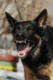 resume template customer service australian kelpie breeders north fatal dog attacks in the usa