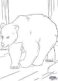 bears u2013 coloring pages u2013 original coloring pages