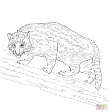 fishing cat coloring page free printable coloring pages