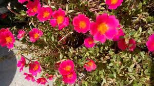 540 aapki farmaish par mera small terrace garden part 1 hindi urdu