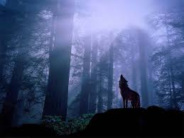 imagenes de fondo de pantalla lobos fondo escritorio lobo aullando