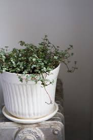 97 best indoor gardening images on pinterest indoor gardening