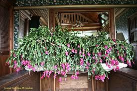 cactus conrad glass gardens