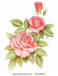 roses flowers pink white vintage roses flowers isolated stock illustration