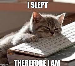 Cute Cat Meme Generator - cute cat meme generator 28 images cute cat meme imgflip cute