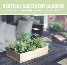 best 25 vertical succulent gardens ideas on pinterest succulent
