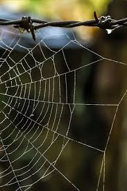 17 Best Images About Spider - 17 best images about spider webs on pinterest nature pattern