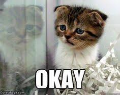 Sad Cat Meme - just okay not anything else ahhhhhhhhhhhhhhhhhhhh