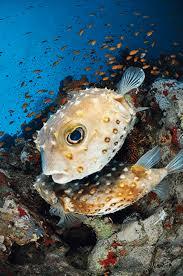 the mating behavior of marine life underwater photos sport diver
