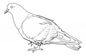 Pigeon Coloring Pages Animated Coloring Pages Pigeon Image 0010 Mo Willems Coloring Pages