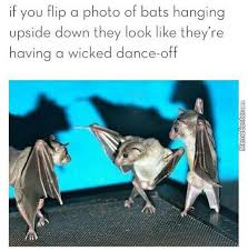 wicked bat dance off by pookynat meme center