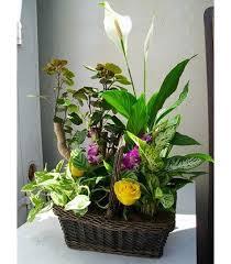 sympathy plants sympathy plants s florist