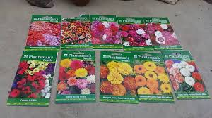 35 winter flowers from india youtube