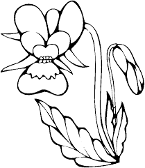 coloring orchid flower picture