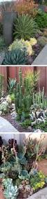 best 25 outdoor cactus garden ideas on pinterest succulent rock