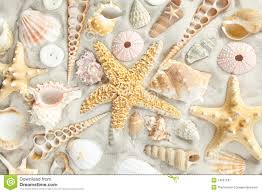 assorted seashells assorted seashells stock image image of background seashell