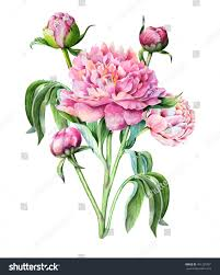 Chinese Birthday Invitation Cards Pink Peony Peony Buds Leaves Watercolor Stock Illustration