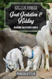 goat gestation and kidding chapter 7 raising goats homestead