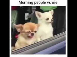 Morning People Meme - chihuahua morning person meme morning best of the funny meme