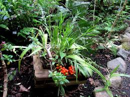 native plant propagation you can u0027t possibly have a bad time in costa rica or