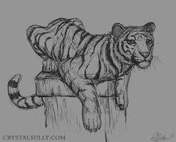 tiger sketch by crystalsully on deviantart