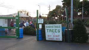boy scout tree lot open