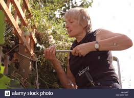 woman mending fences an repairing outside of house stock photo