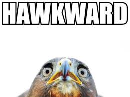Hawkward Meme - well this is hawkward meme mah nigga mah nigga quickmeme mtm