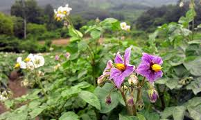 beautiful plants 35 photos of beautiful plants in jirisan national park places