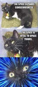 Meme Space - spice vital to space travel cat meme