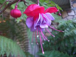beautiful exotic flowers