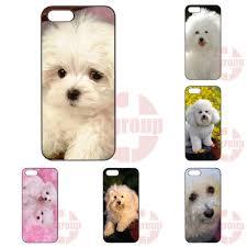 bichon frise 6 years old popular dogs bichon frise buy cheap dogs bichon frise lots from